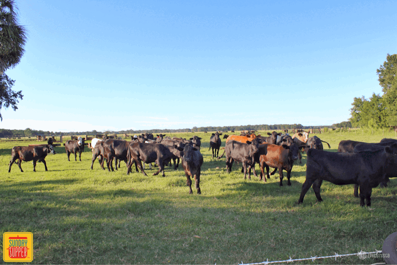 Florida Beef Immersion Experience #SundaySupper