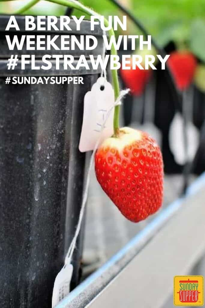 Berry Fun Weekend #SundaySupper #FLStrawberry