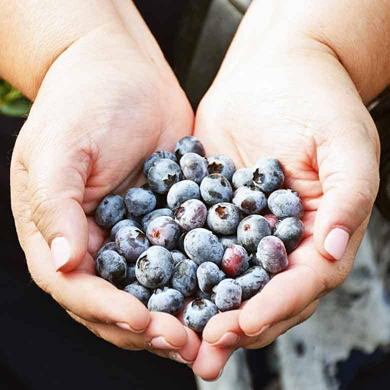 2 hands cupped together holding freshly picked blueberries