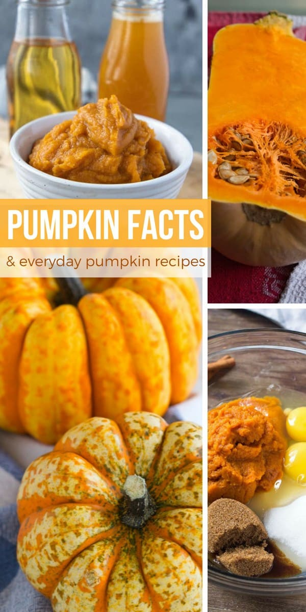 Facts about Pumpkins and Pumpkin Recipes on pinterest