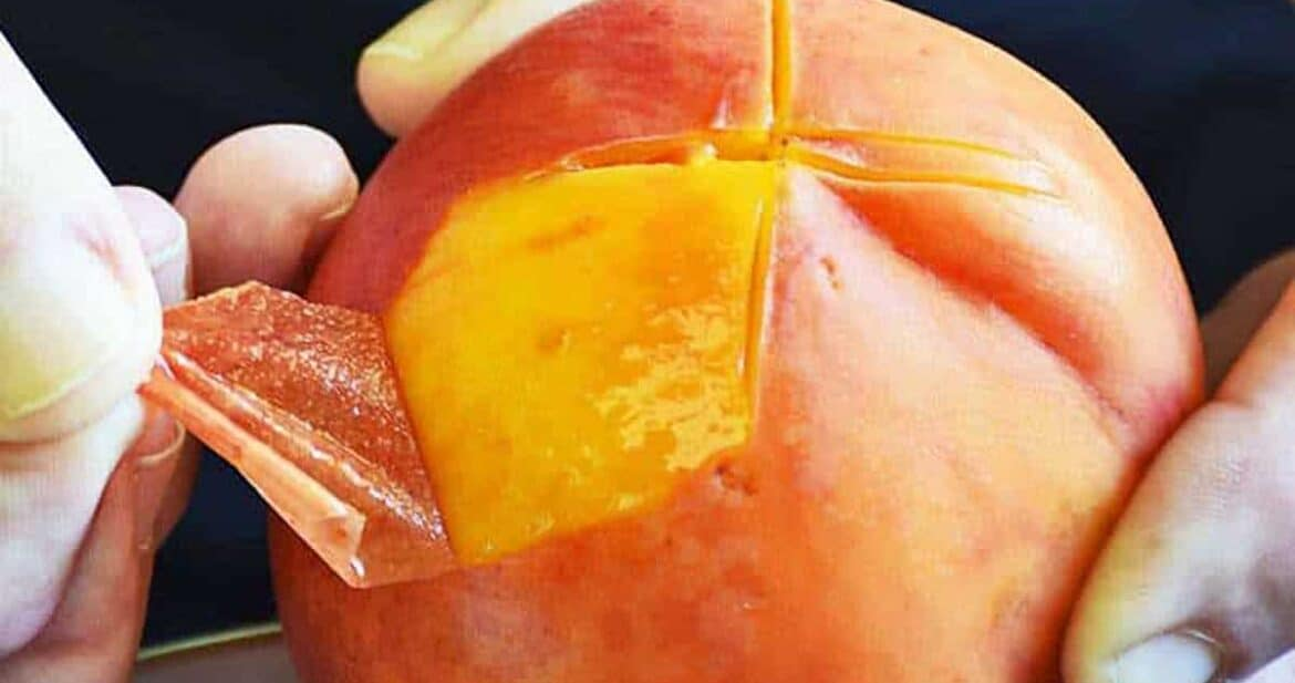 Peeling the skin off a scored peach easily with fingers